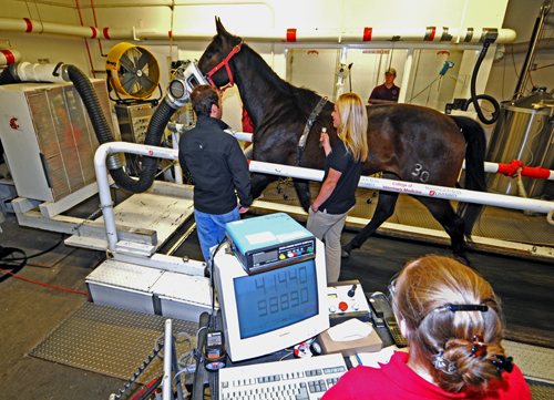 Horse on Treadmill with students working along side