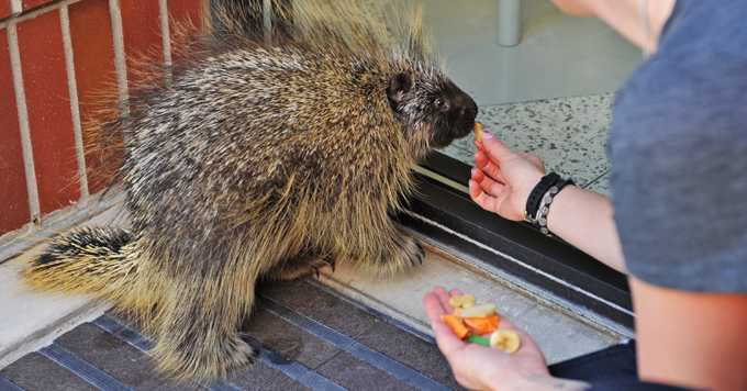 WSU Gets a Visit from  Prickly Patient