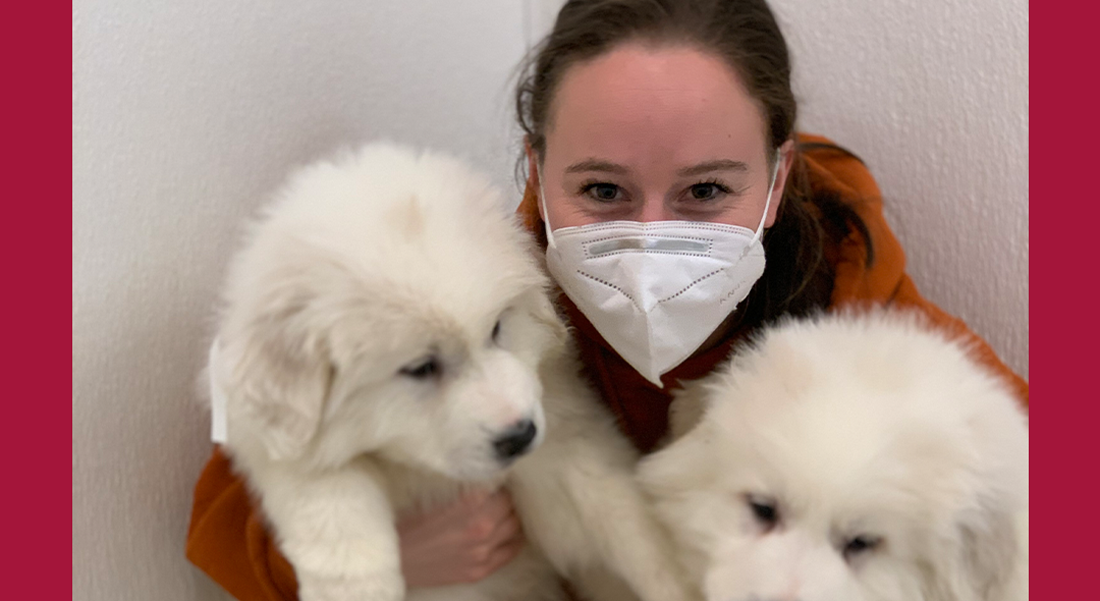 Alyssa Riley with two fluffy white puppies.